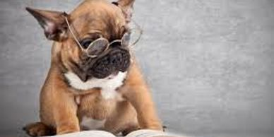 french bulldog reading a book