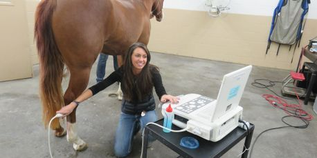 Abby Matthaeus DVM performs an ultrasound of a horse's leg
