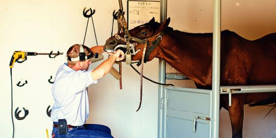 Pete Knox DVM performing a complete dental exam on a horse