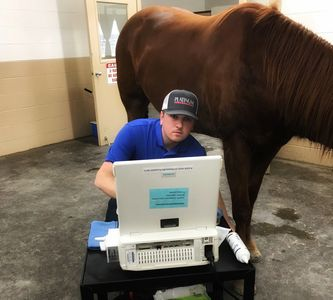 Jared Sharp DVM performs an ultrasound to help diagnose a horse's lameness