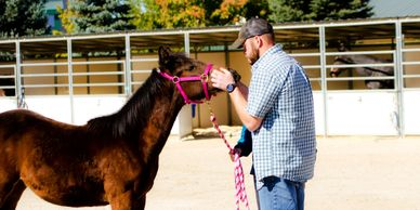 Kevin Wahl DVM, DACVS evaluates a yearling horse