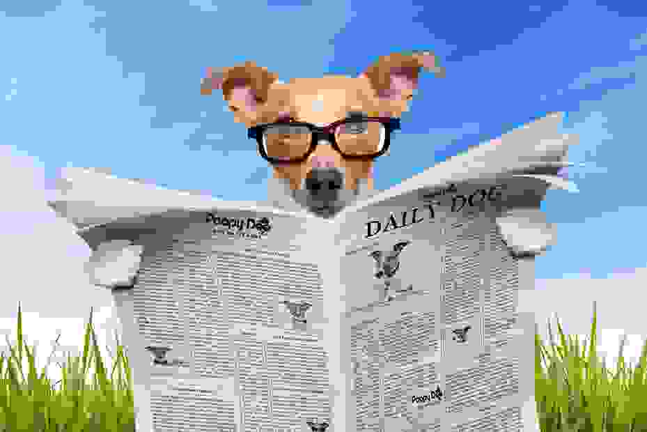 Jack russell reading newspaper on Poopy Doo Dog Waste Pros.  Dog Poop Removal.  Pet Waste Clean Up.