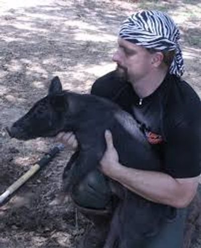 Chester Moore moves a young wild boar from a trap in a yard to a pre harvest holding pen.