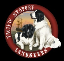 Pacific Seaport Landseers LLC.... Sanctioned Breeder of Landseer