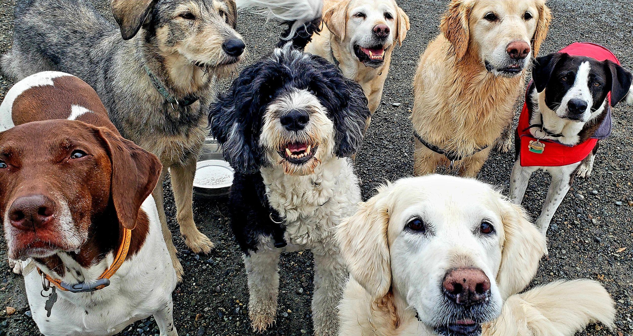 Puppy Love Seattle