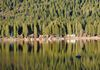 Donner Lake Tree Reflections
