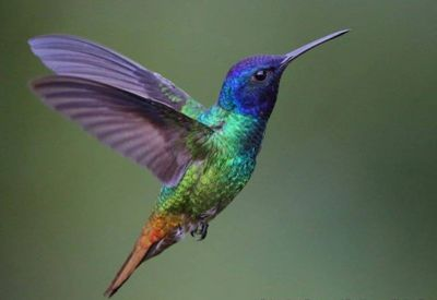 Hummingbirds legends say these jeweled creatures remind us that joy is the sweetest nectar of life