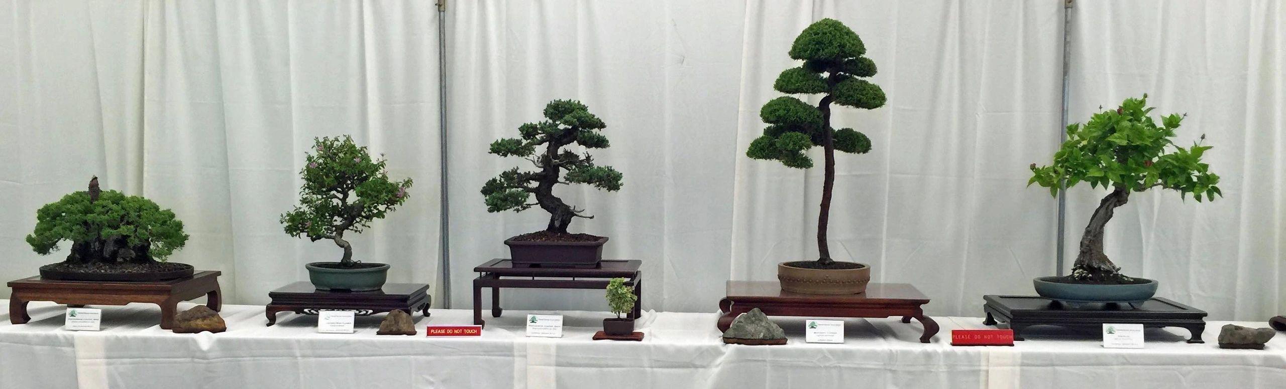 Hba Hawaii Bonsai Association