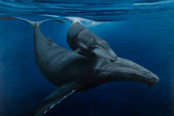 Humpbacks, ocean art, whale art, oil paintings,