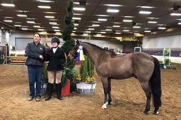 YANKEE 13.1hh 12 year old grad gelding pony  Yankee has many miles in and out of the show ring.  A g