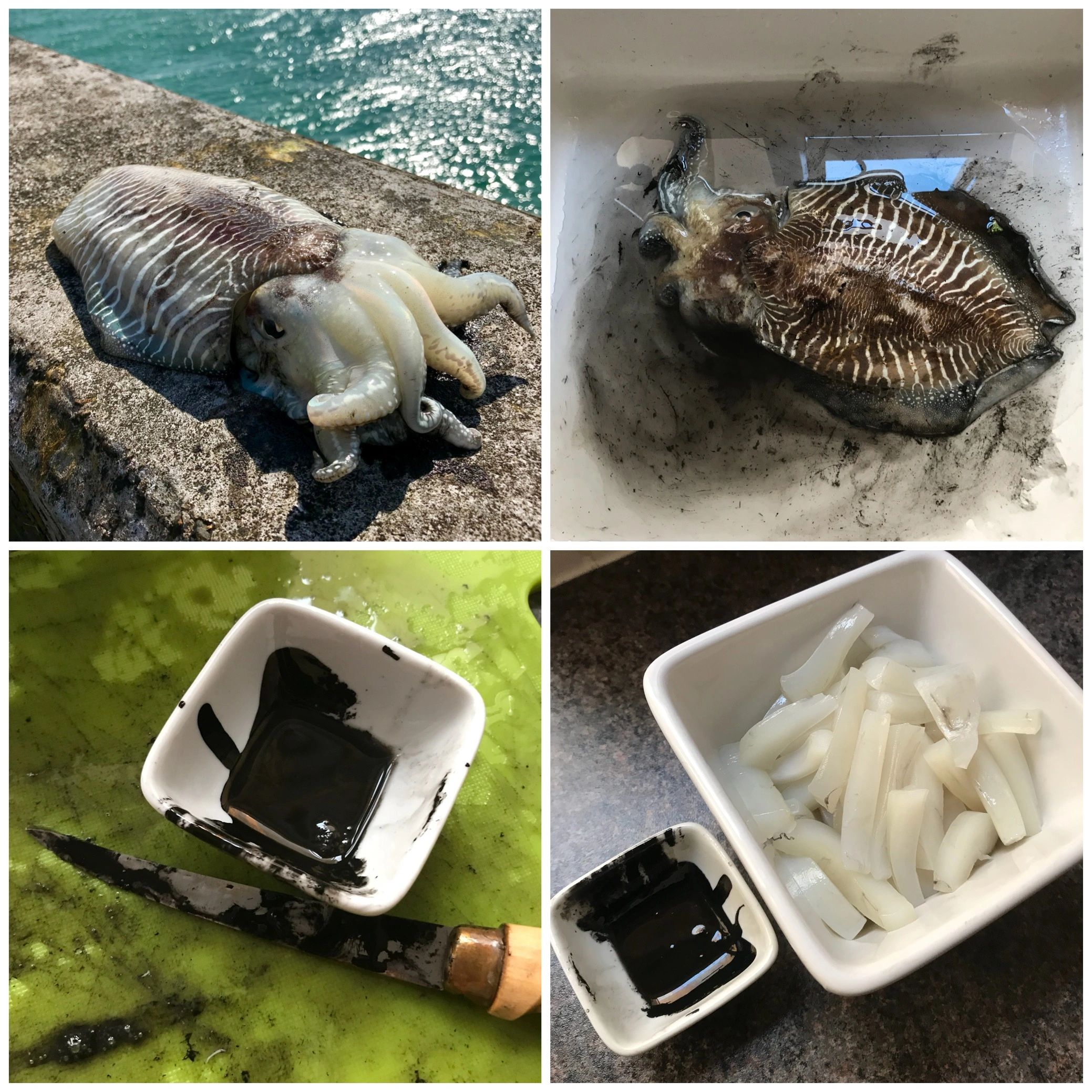 Brighton cuttlefish, cuttlefish preparation, cuttlefish ink, sepia, prepped cuttlefish ready to cook