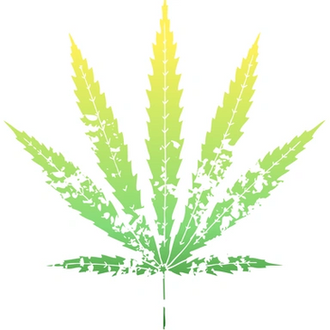 License for Marijuana Dispensary