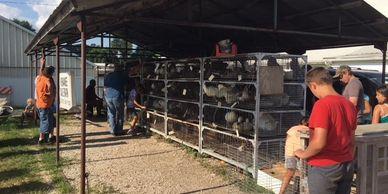 Kewanee Sale Barn
