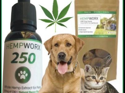 CBD Oil for your pets 250