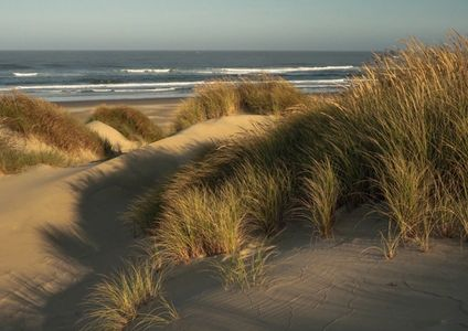 florence oregon, coast, sand dunes, ocean, photo workshop, photo tour, photography class, sea grass