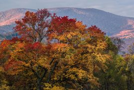 cades cove, great smoky mountains, tennessee, fall color, photography class, photography tour