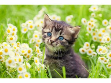 Cute adoptable kitten in a field of flowers