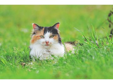 Cute adoptable cat in a field of grass