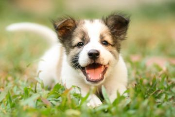 Cute adoptable puppy in a field