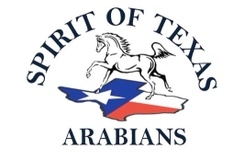 Spirit of Texas Arabians