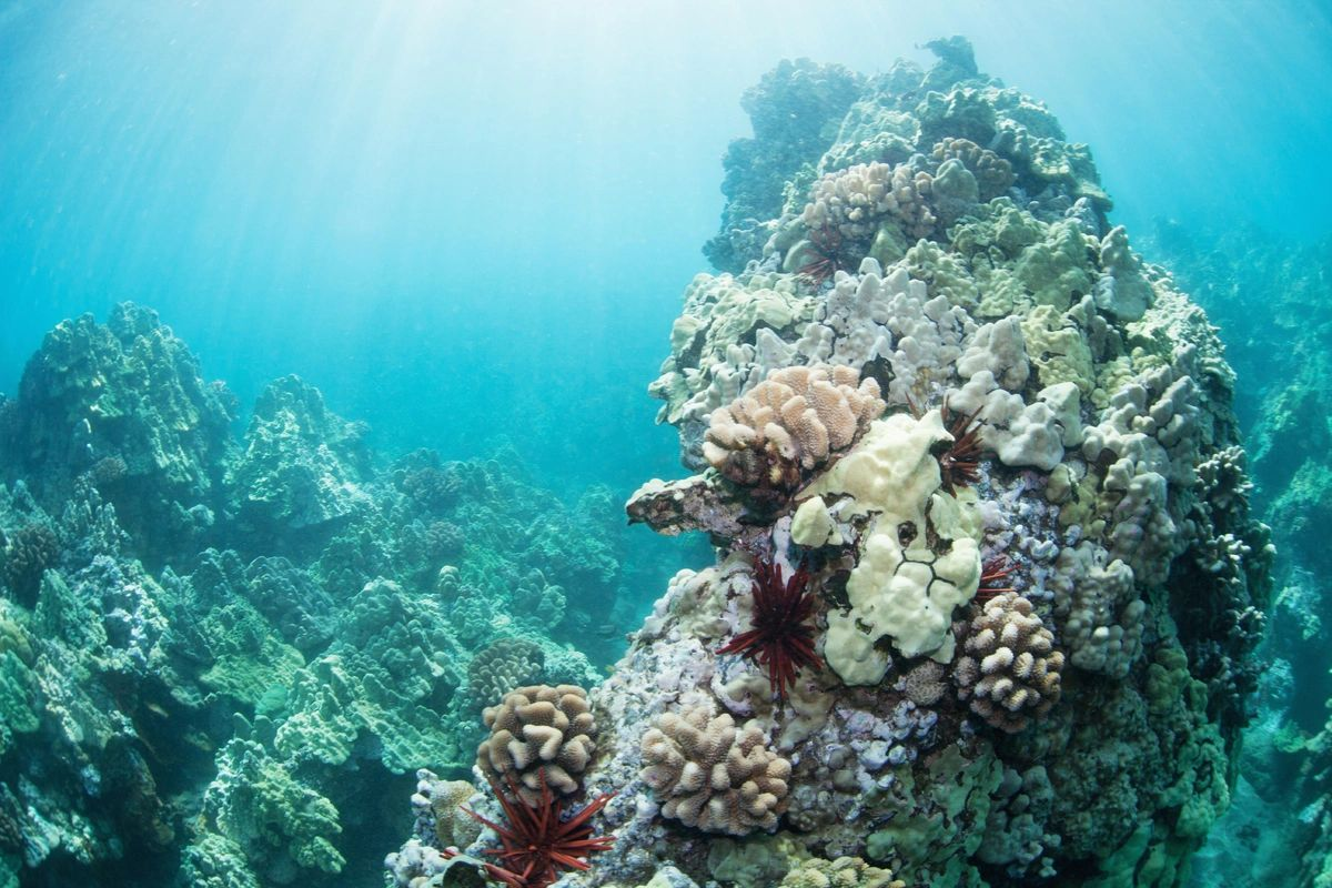 Coral reefs to snorkle
