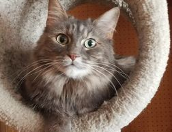 Cat products and cat supplies on Chewy.com. All cat toys, cat food, cat accessories, cat litter. Ess