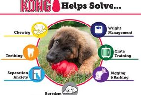 All sorts of high quality Kong toys and products.