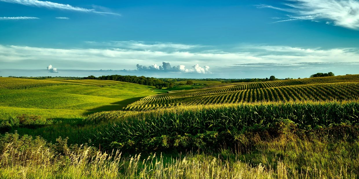 Iowa Farm Land for Sale