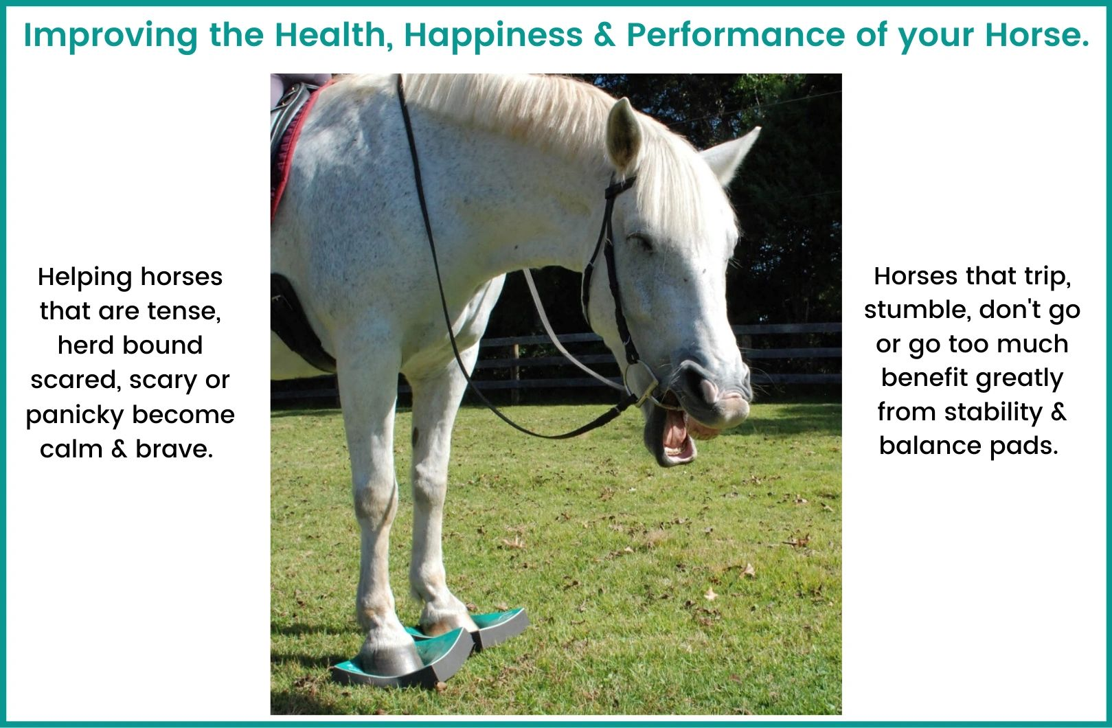 SURE FOOT Pads help horses that trip, stumble, bolt, won't go, won't float or are in rehabilitation.