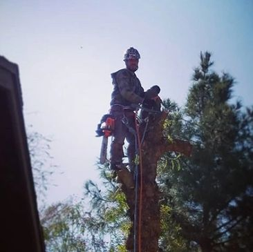 ISA Certified Arborists and for hire