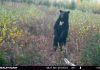NICE FALL BEAR AT BAIT IN ZONE 17