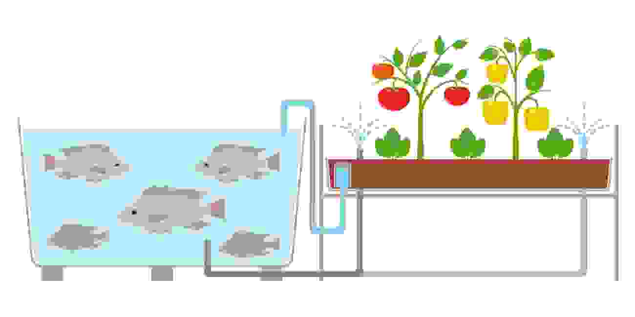 aquaponics hydroponics fish plants garden self sufficient urban home stead prepper skills emergency