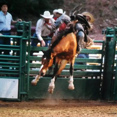 Bareback Rider Rank Bucking Horse at Rodeo