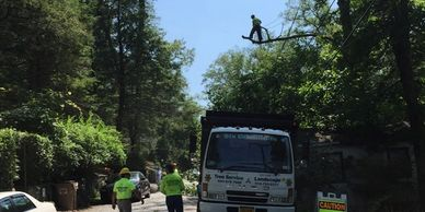 Six Diamonds Tree Services at work in tree with truck