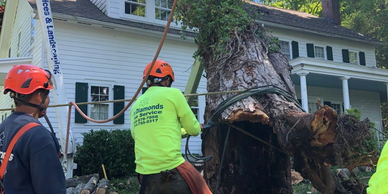 Six Diamonds Tree Services Removing Dangerous trees