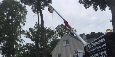 Six Diamonds Tree Services at work in bucket truck