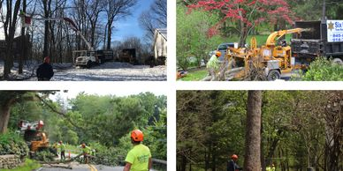 4 seasons 4 shots of Six Diamonds Tree Services at work