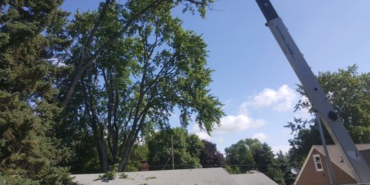 Tree Removal with crane St Paul