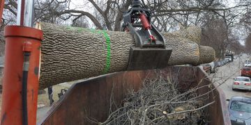 Emerald Ash Borer EAB tree removal South Minneapolis