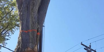 Large Elm Tree removal in Minneapolis