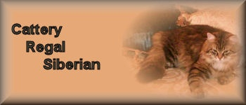 Regal Siberian Cattery         Cats and Kittens