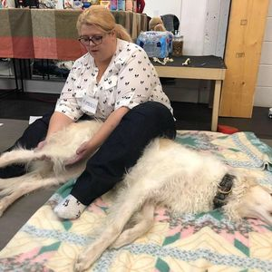 physiotherapy dog rehab canine