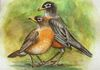 The Robbins, Male & Female American Robins, Commission for a couple