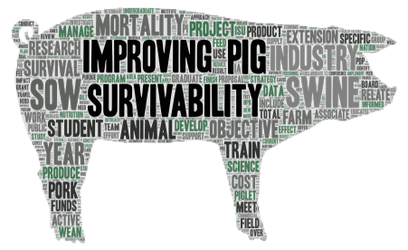 Improving Pig Survivability