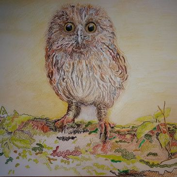 Endangered wildlife Tawny owl