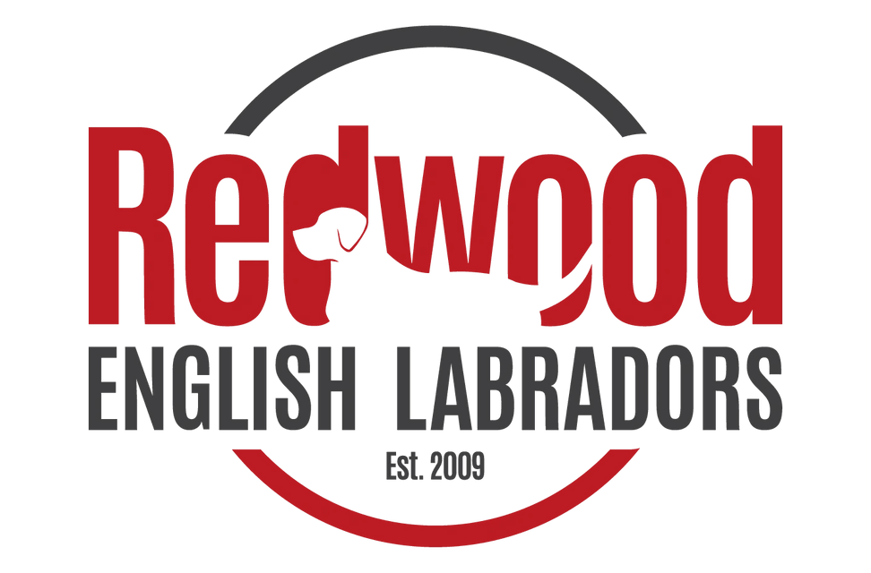 Redwood English Labradors