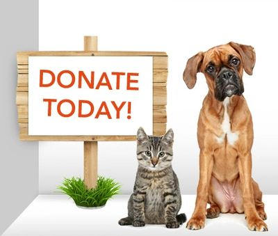Your donation will help animals in Tennessee and built a place for them to feel safe and love.
