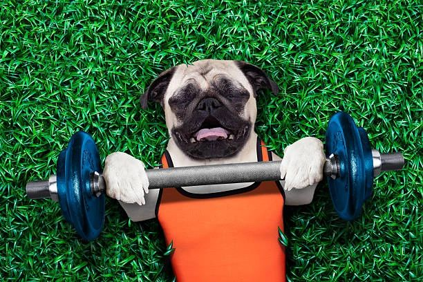 Does Your Dog Need To Get In Shape? Learn Some Manners? Dog Training Is The Answer!