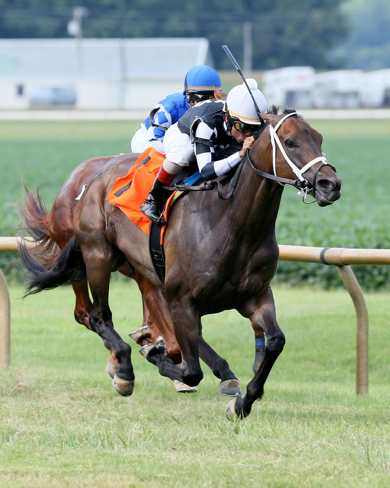 Mr. Misunderstood winning last year's Kentucky Downs Preview Tourist Mile. Coady Photography
