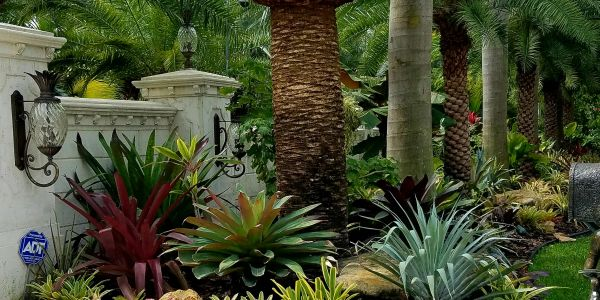 Colorful low maintenance landscaping in florida